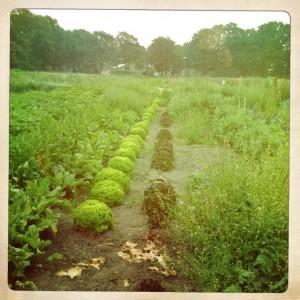Ackerfläche im Juli