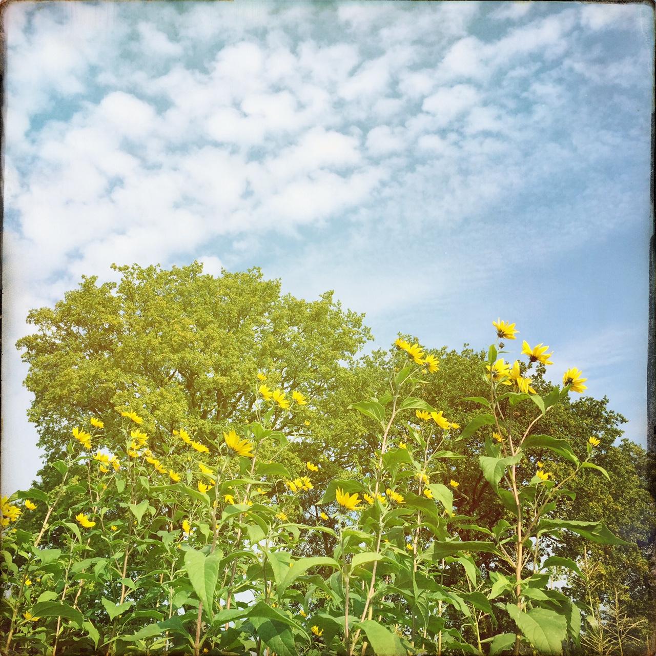 Herbst, Himmel und hohe Blumen